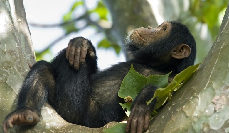 Virunga Gorilla Permits